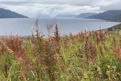 Alaska Landscape Kodiak Island