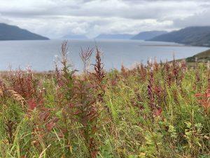 Alaska flowers